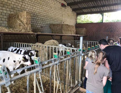 Klasse 5b auf Exkursion auf den Bauernhof Hesse