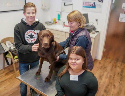 Pressebericht zum Betriebspraktikum: Traumberuf Tierarzt kennen lernen